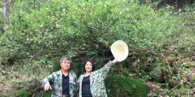 安徽祁门红茶生产基地