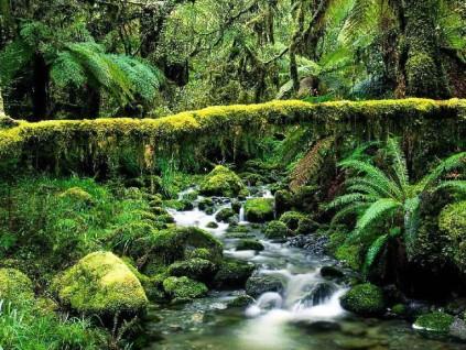 """亚马逊雨林缩减临界点迫近 地球或将进入""""紧急状态"""""""