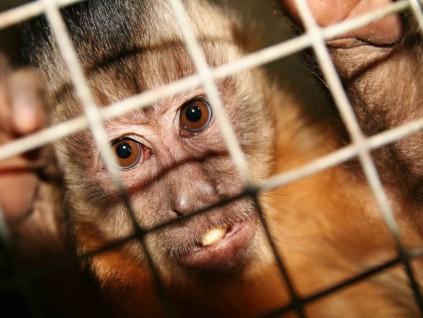 受够!实验屡被批虐待猴子 德科学家要举家迁中国了