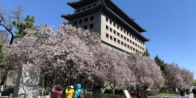 永远的梦想 永恒的追求 北京世园会开幕一周年之际