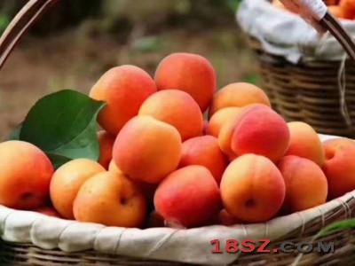 陕西露天红杏