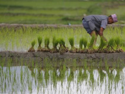 联合国警告:产粮国限出口 疫情造成50年来最严重粮食危机