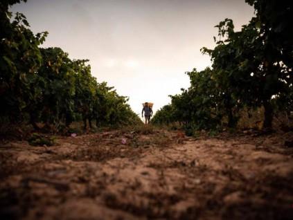 联合国:全球气候变化未因新冠疫情而止步