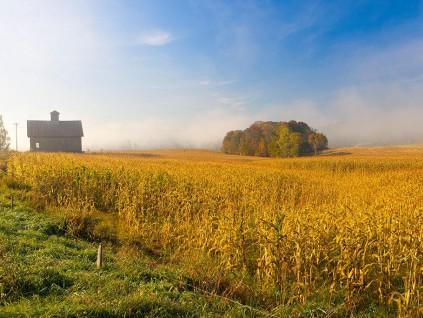 中国或购买更多美国玉米 中粮集团承诺向加工厂供货