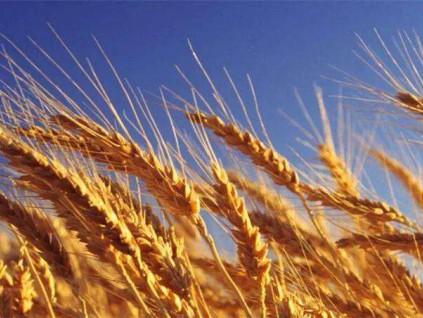 澳贸易部长:中澳大麦争端提交世贸仲裁