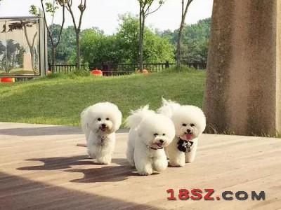 2021重庆国际宠物展|2021宠物展|宠物水族用品展