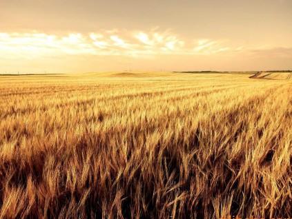 中国第一季大豆、玉米、小麦进口增长强劲