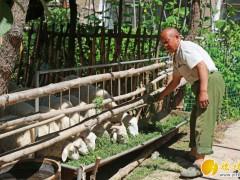榆林加快推进羊山地苹果马铃薯蔬菜玉米产业高质量发展