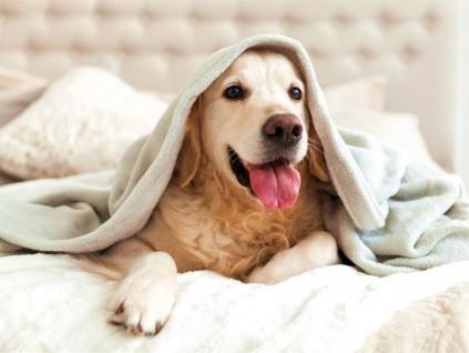 狗会传染「超级细菌」给主人 专家叹:难治恐变噩梦一场