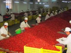 佳县与陕西果业签约投资6亿元打造沿黄红枣产业带