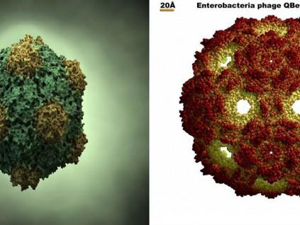 美国加州大学研发常温新冠疫苗 改造自植物病毒
