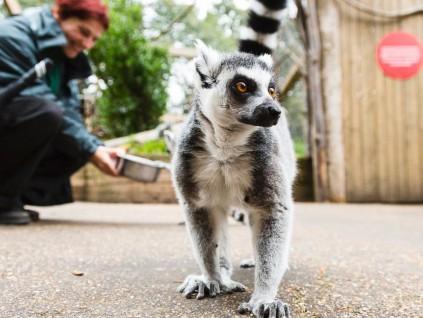 美国新英格兰一些动物园已开始为动物接种新冠疫苗